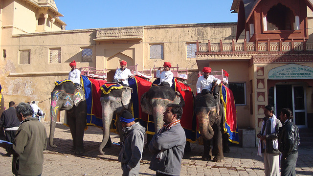 Full Day City Tour With  Amber Fort - Jaipur/Rajasthan
